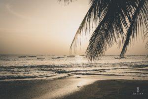 Palmtree sunset on the beach in Senegal