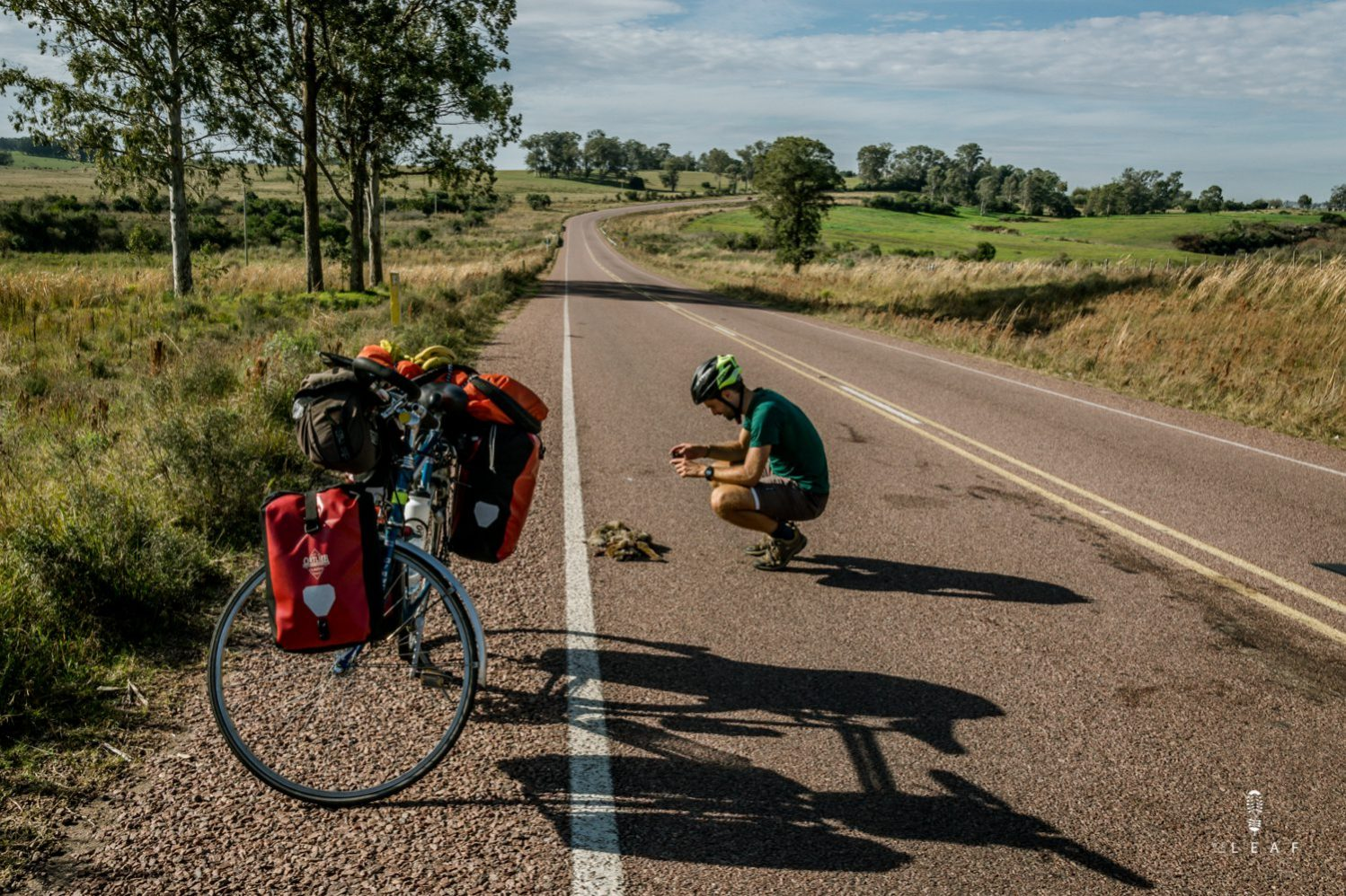 Cyclist taking picture of a dead animal for Adventure Scientist Road Kill project