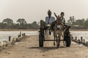 Locals on a donkey cart in Senegal