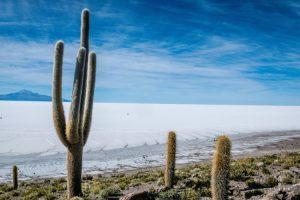 Isla Pescado Salar de Uyuni