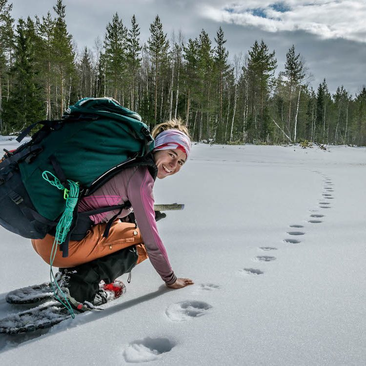 wolverine tracks in the snow