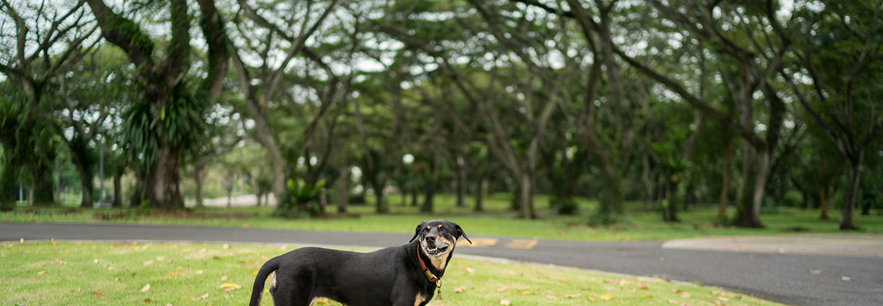 Pasir Ris Park – Exploring Dog-friendly Singapore Parks