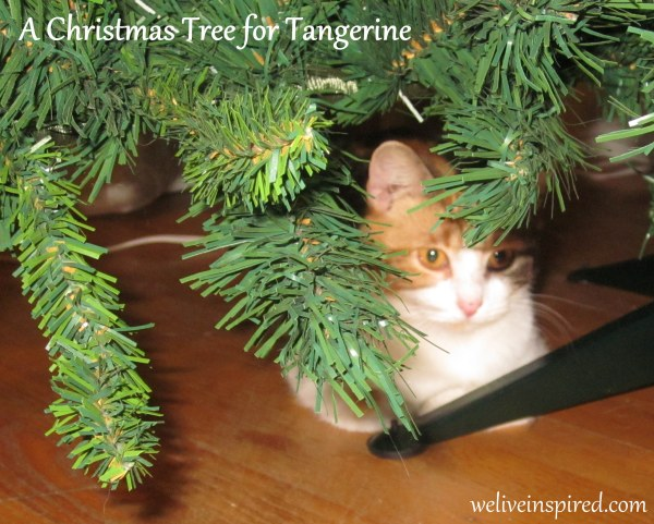 Calico Cat under the Christmas Tree