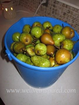 bucket of pears