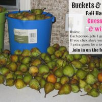 Harvesting Pears at the Cottage and a Fall Giveaway Contest!