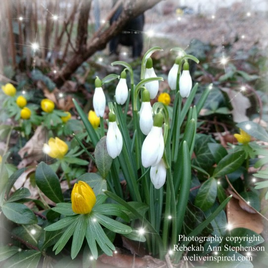winter woodland flowers