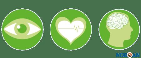 Wirkung von Omega-3-Fettsäuren auf den menschlichen Körper
