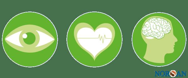 Omega-3-Fettsäuren sind essentiell für Augen, Herz und Gehirn.