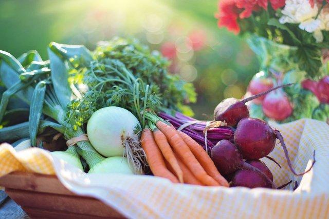 Korb mit frischem Gemüse aus dem Garten