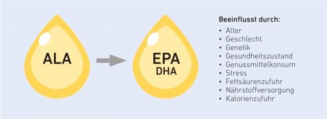 Umwandlung von Alpha-Linolensäure in die positiven Omega-3-Fettsäuren  EPA und DHA.