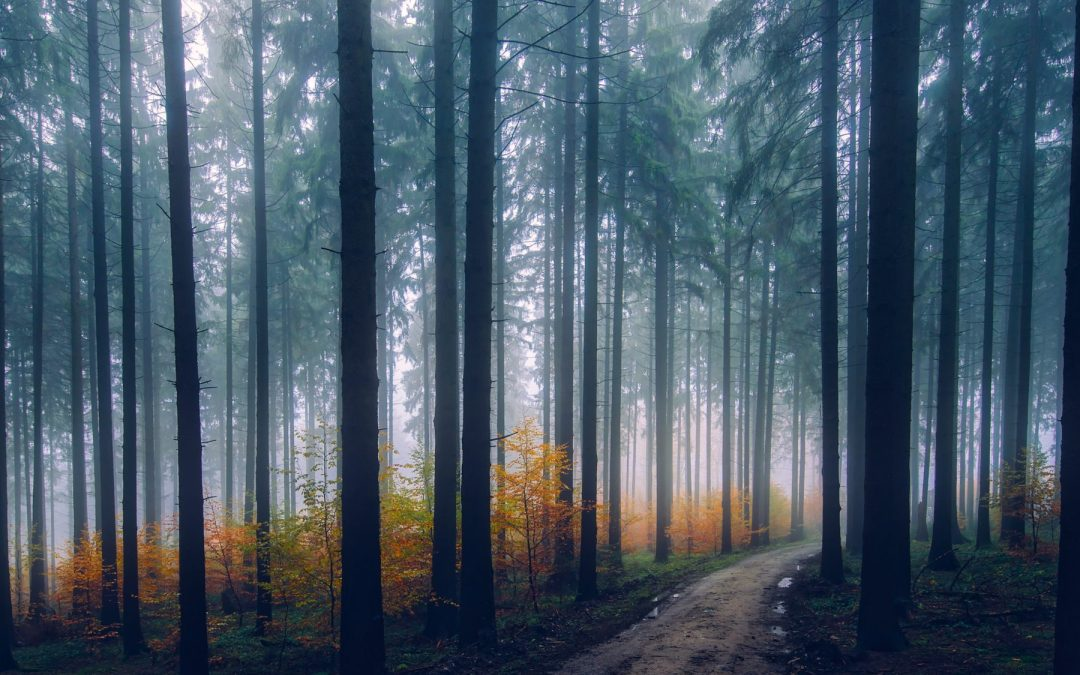 Why The Woods Captivate Our Souls