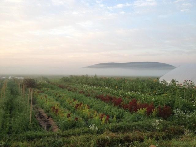 Rise & Root Farm Misty Morning
