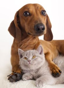 Kitten and dog pet range to manage stress of pets