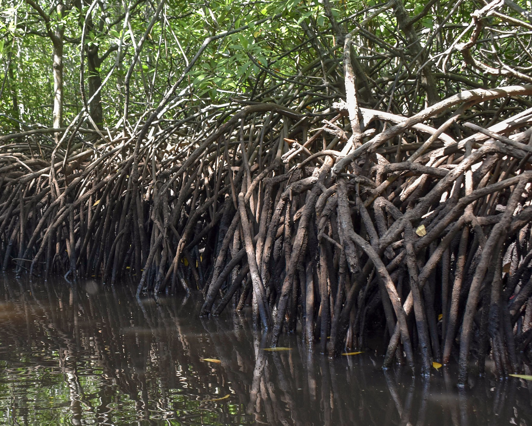 Mangrove Forests on Lombok Island