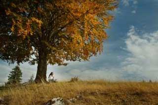 _girl_under_tree