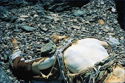 The body of George Mallory as found below the peak of Mount Everest.