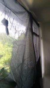 Verhüllung des Fensters