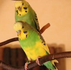 Purzel und Sunny