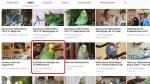YouTube Kanal Wellensittiche Blog Freiflug