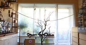 Wellensittiche_Blog_Fenster richtig sichern_Vogelzimmer