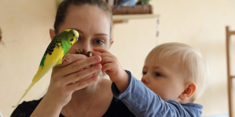 Wellensittiche Blog Kinder Haustiere Eltern