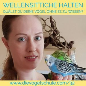 Wellensittiche Blog Podcast Teil 1 Ann Castro Wellensittiche Grundlagen