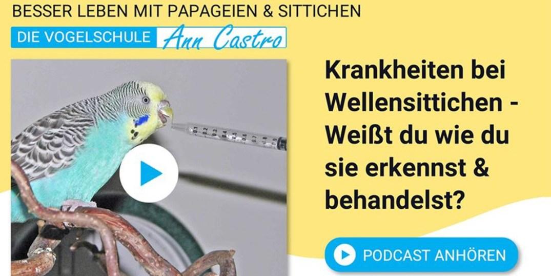 Wellensittiche Blog Podcast Teil 4 ann castro und wencke sabrina schacht am häufigsten bei Wellensittichen vorkommenden Krankheiten