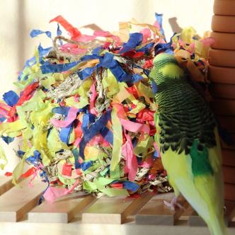 Wellensittiche Blog Produktempfehlungen Spielzeug2