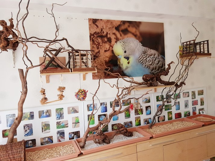 Wellensittiche Blog Neues Vogelzimmer 5