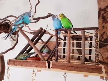 Wellensittiche Blog Neues Vogelzimmer 7