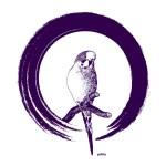 wellensittiche blog psittia antonia kringel violett