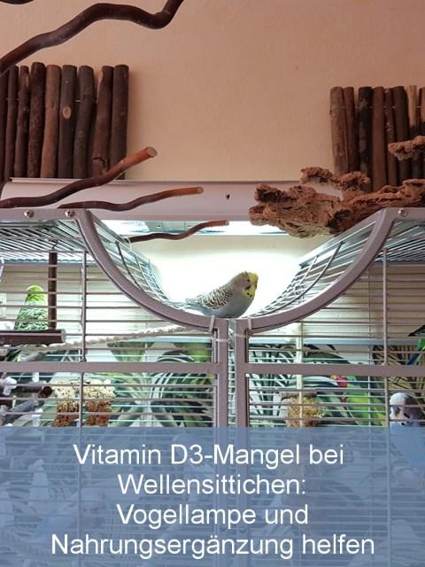 Vitamin D3-Mangel bei Wellensittichen Vogellampe und Nahrungsergänzung helfen