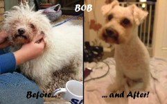 BOB arrived in an appalling condition! Thanks to Zoe at Muddy Paw he had a much needed pamper and was a lot happier... After his much needed pamper he went on to find his own forever family!