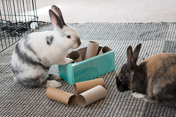 Two rabbits playing with toilet paper rolls