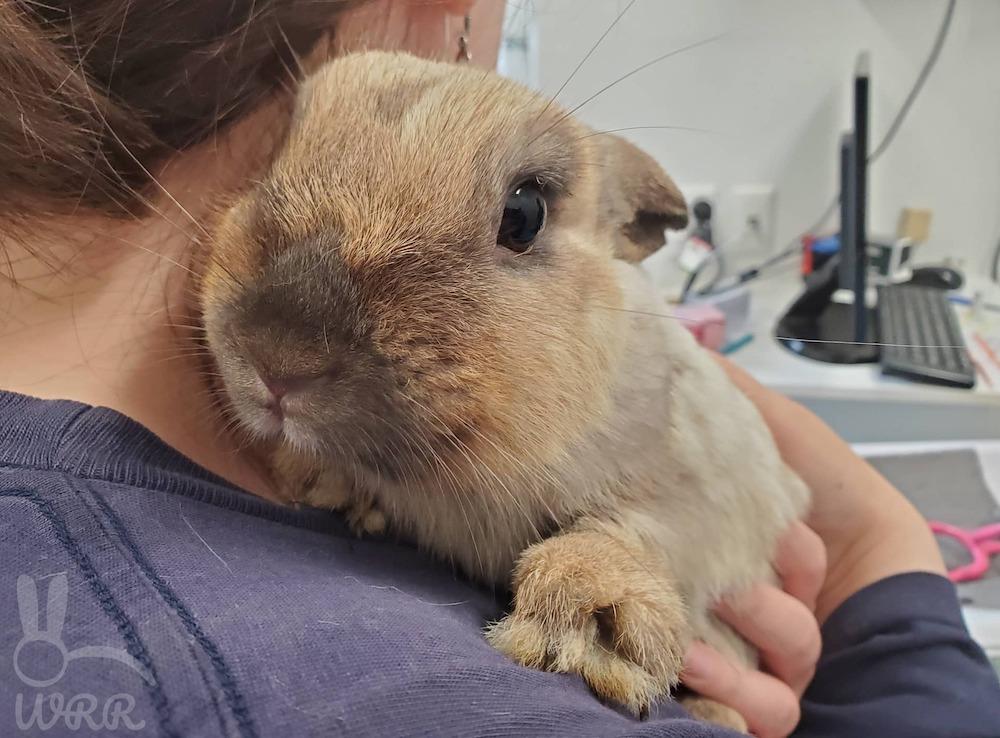 Lady holding a rabbit over her shoulder
