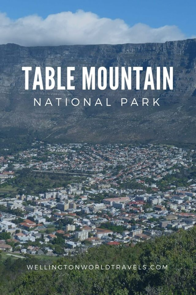 Table Mountain National Park - Wellington World Travels | travel destination | travel bucket list ideas #Photodiary #photoessay