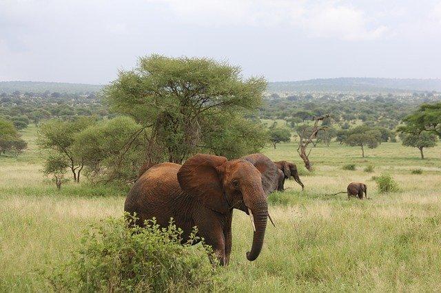 Top 5 Destinations that Prove Tanzania is The King of Safari - Wellington World Travels #safari #africansafari
