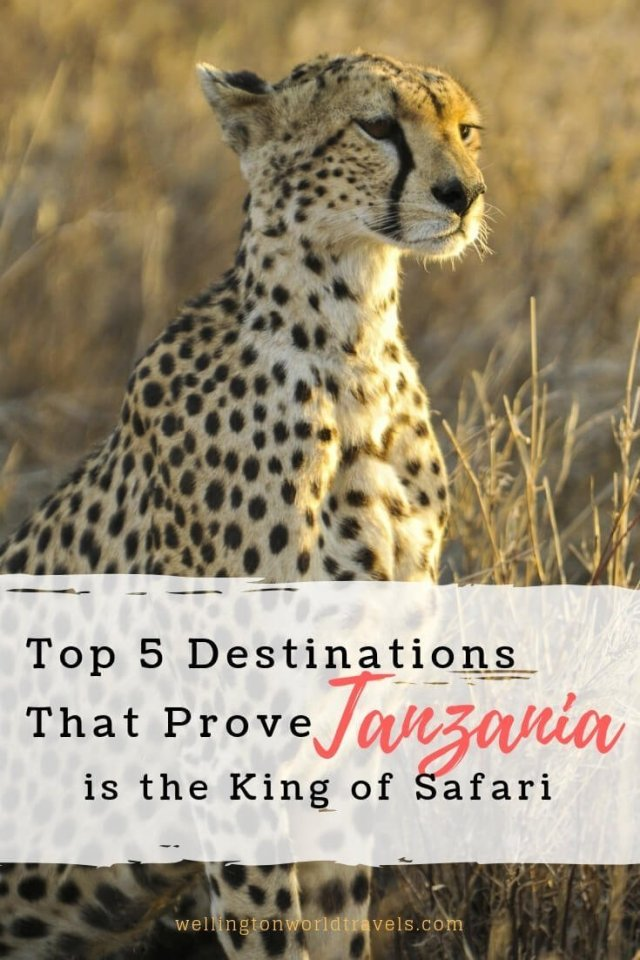 Top 5 Destinations that Prove Tanzania is the King of Safari - Wellington World Travels | travel guide | travel destination | travel bucket list ideas #safari #Tanzania #Africa