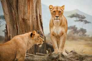 6 Tips for Taking Your Family on a Safari