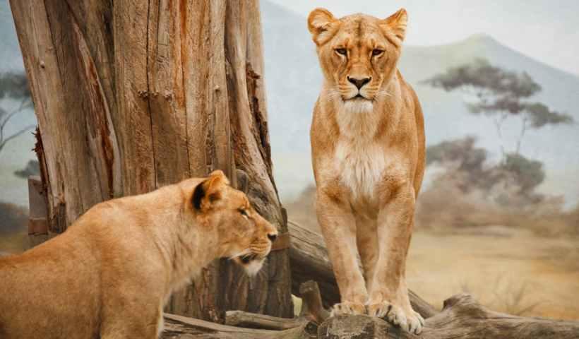 6 Tips for Taking Your Family on a Safari - Wellington World Travels   safari with kids   safari with family