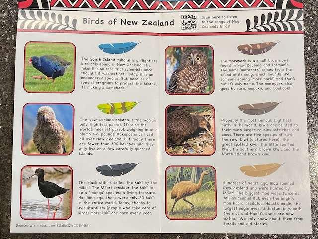 birds - New Zealand with Womple Studios