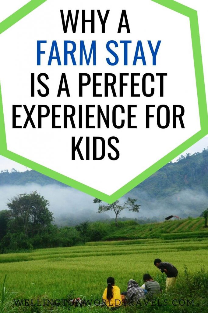 Reasons a Farm Stay Is A Perfect Experience for Kids