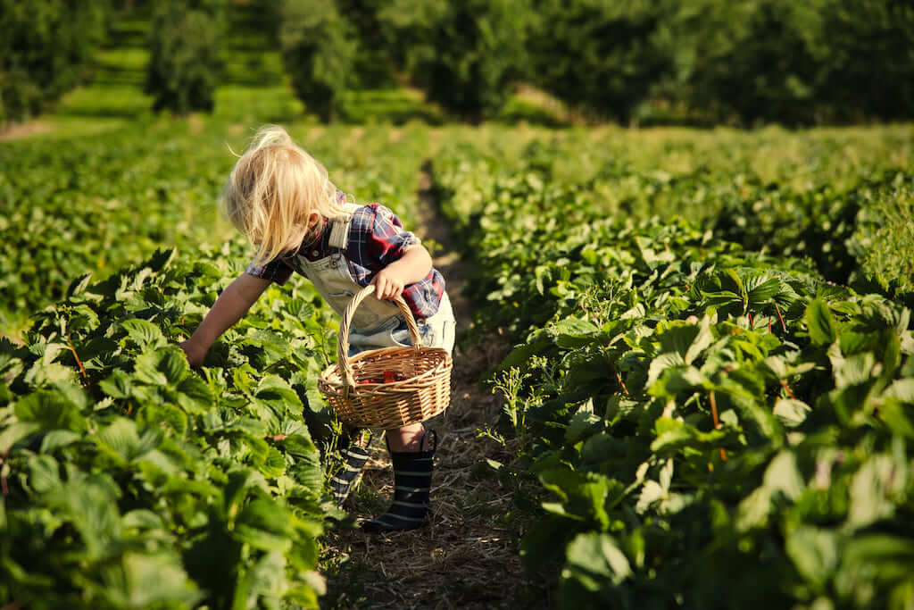 9 Reasons a Farm Stay Is A Perfect Experience for Kids