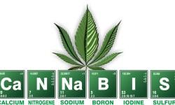 cannabis - cbd vs thc