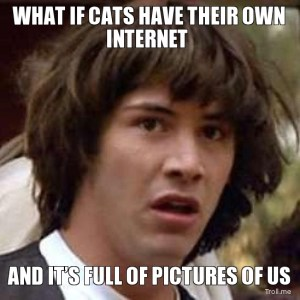 what-if-cats-have-their-own-internet-and-its-full-of-pictures-of-us
