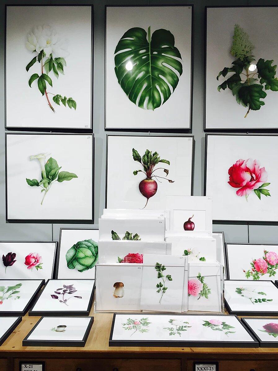 Aquarelles botaniques de Vincent Jeannerot