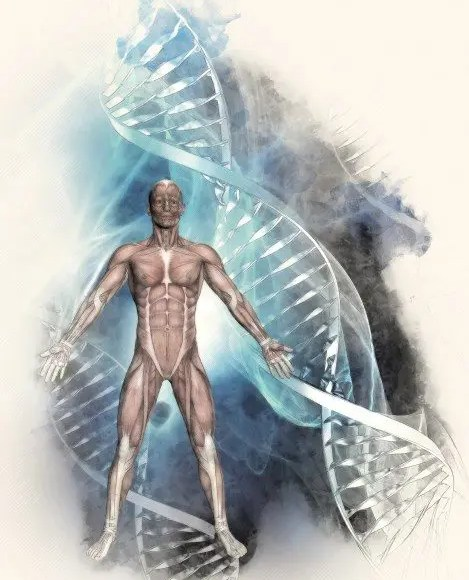 dna-helix human body