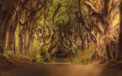 Masterclass on Celtic Myth: An Exploration of Sacred Ireland. Zoom Online Event   01/02/2021