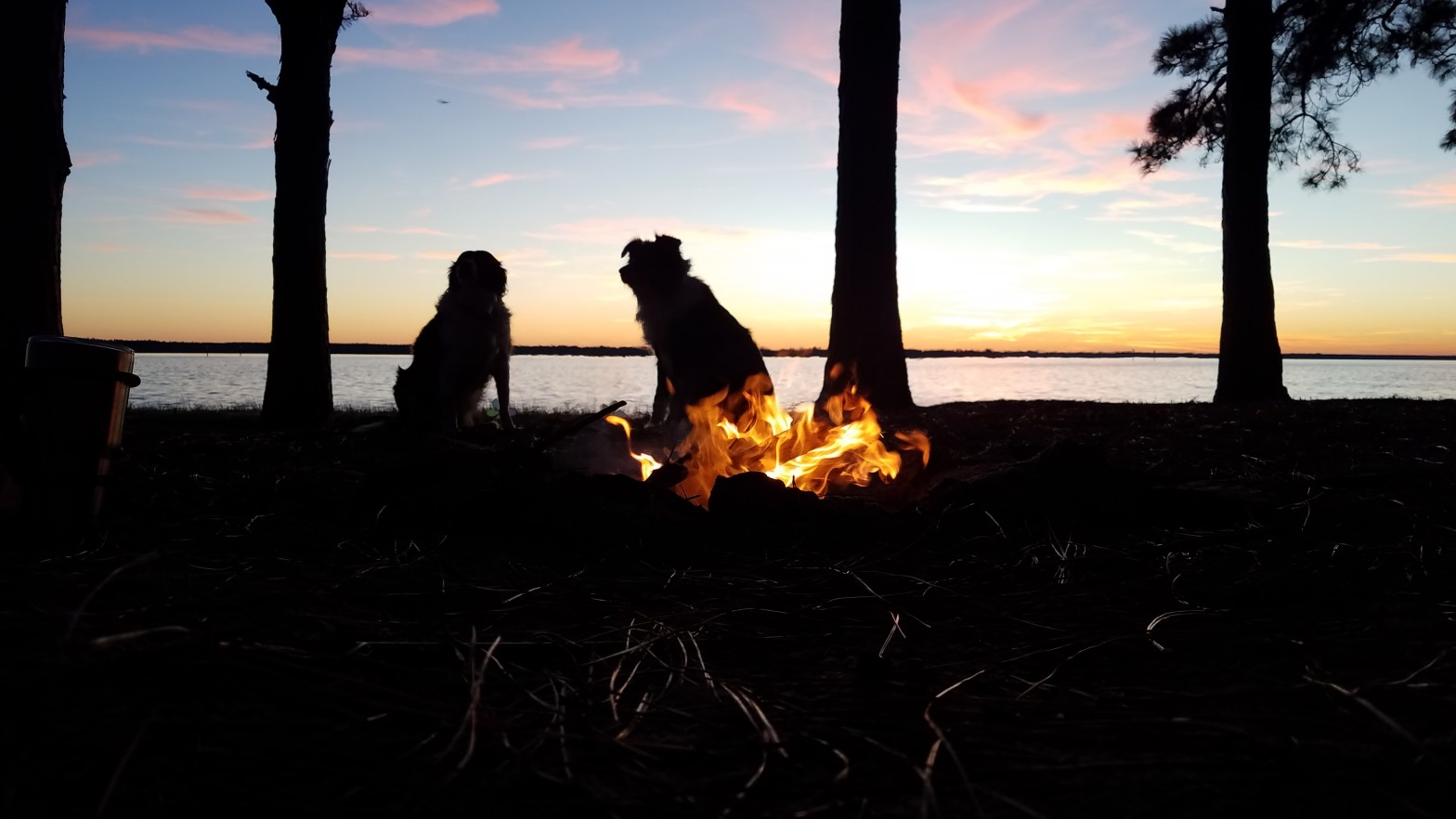 campfire with dogs