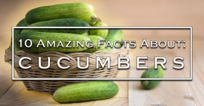 10 Amazing Facts About Our Super Cucumber